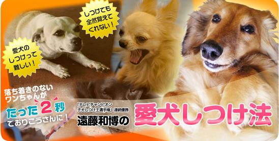 遠藤和博の犬のしつけ講座(遠藤和博の愛犬しつけ法)